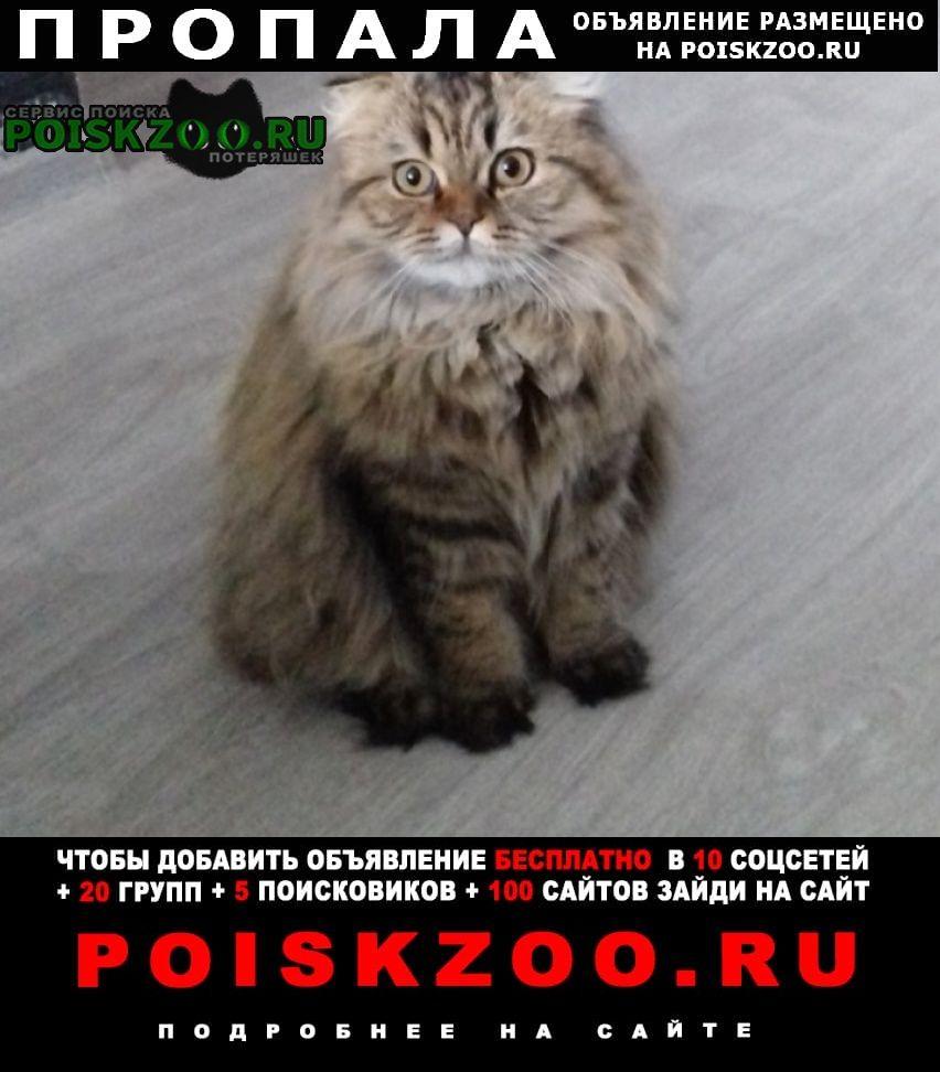Орехово-Зуево Пропала кошка 10. 04.21