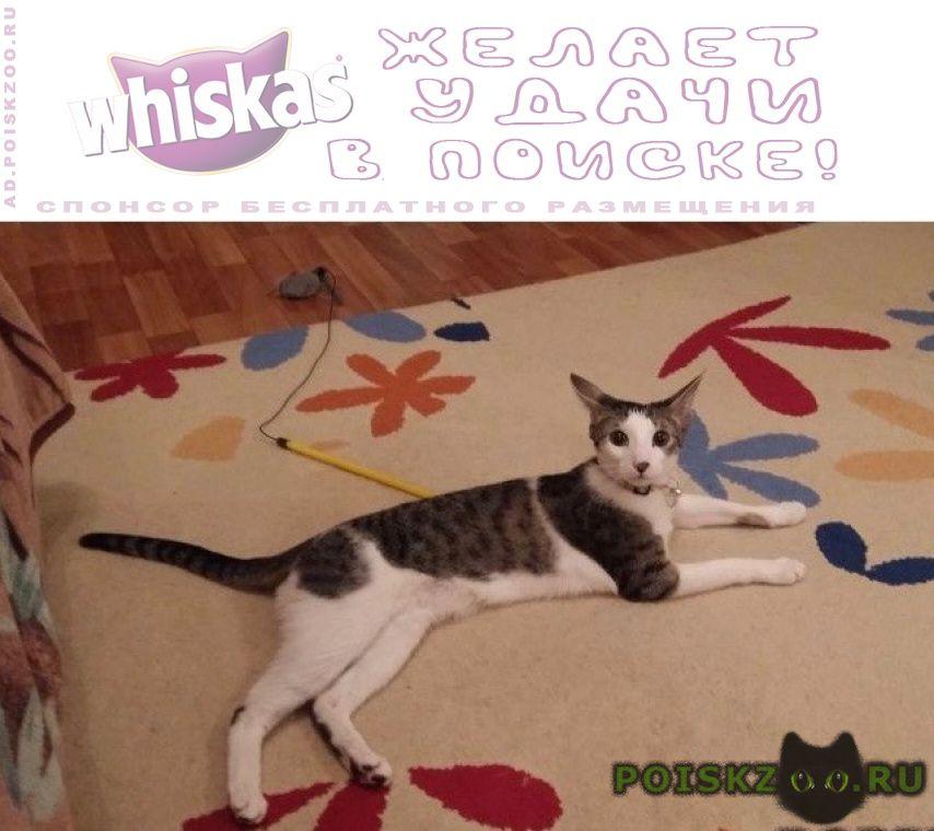 Пропала кошка эва г.Москва