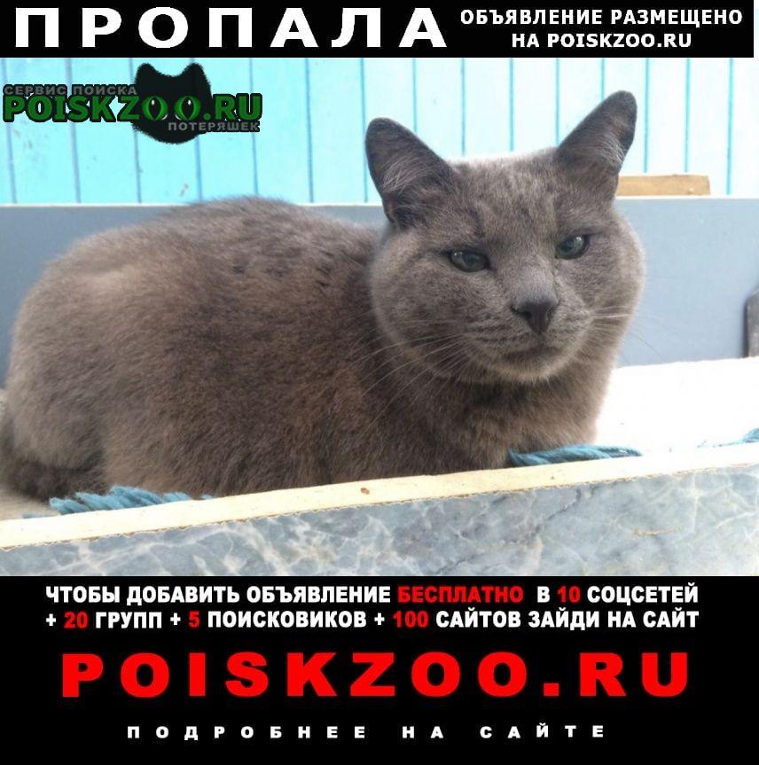 Пропал кот Зеленогорск (Ленинградская обл.)
