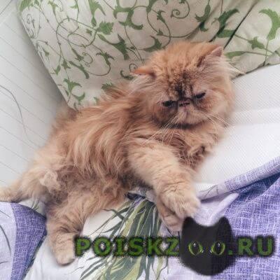 Пропал кот очень прошу помочь г.Нижний Новгород