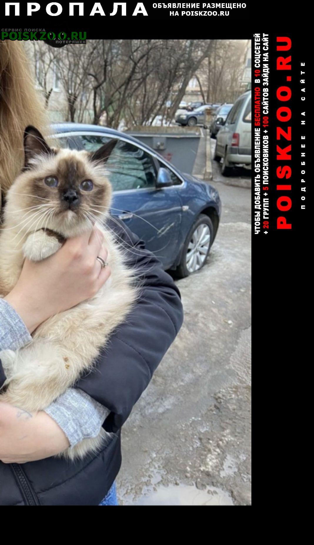 Пропала кошка Жуковский