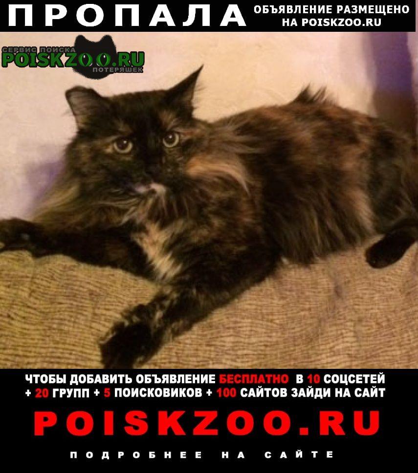 Пропала кошка клава Павловский Посад