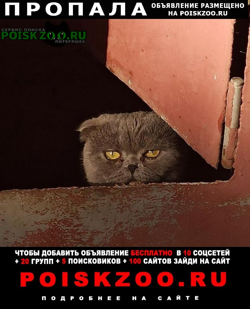 Пропала кошка Южноукраинск