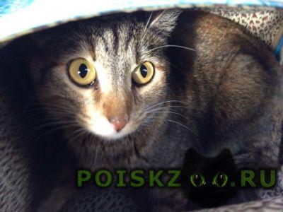 Пропала кошка г.Архангельск