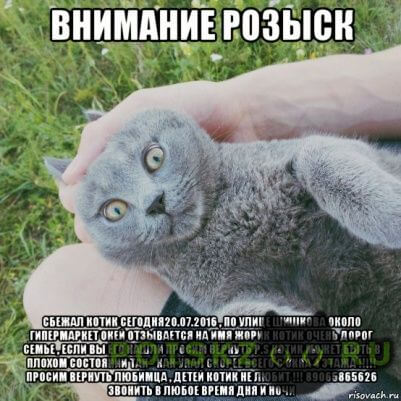 Пропал кот г.Воронеж