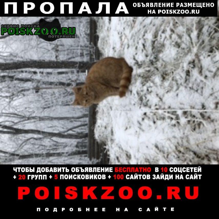 Пропала кошка котик Ставрополь