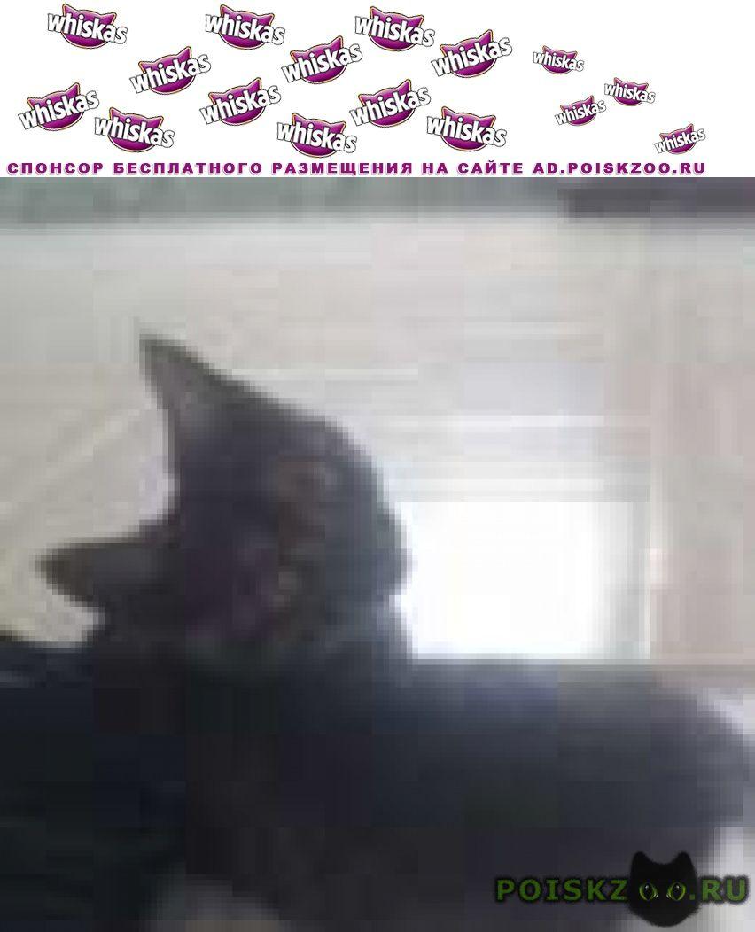 Пропала кошка потерялась кличка лиза Арамиль