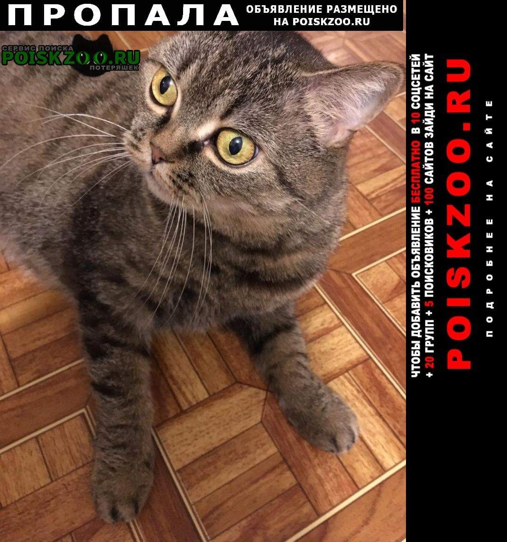 Ядрин Пропала кошка