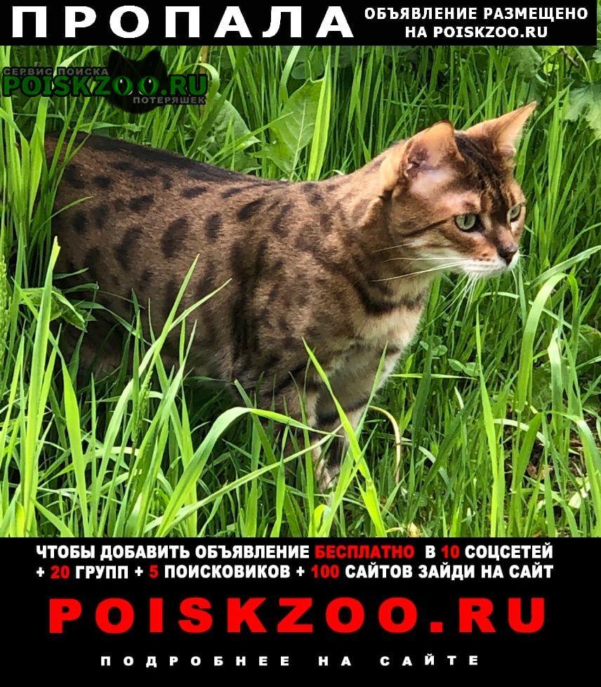 Пропала кошка селиваниха, истринский район Истра