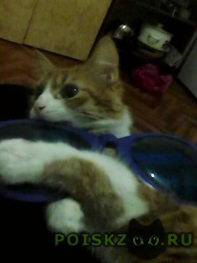 Пропала кошка Железноводск(Ставропольский)