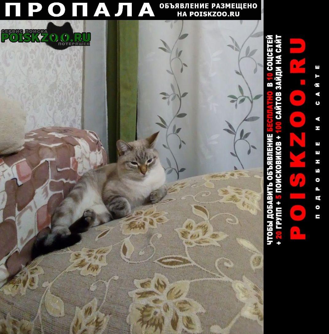 Пропал кот савелий г.Красноярск