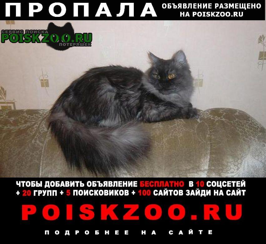 Чита Пропала кошка кот
