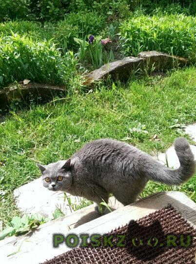 Пропала кошка британка, р-н печатники г.Москва