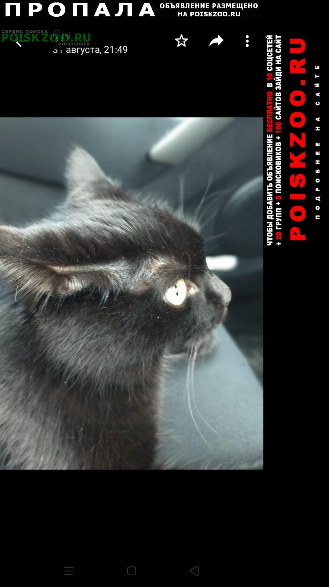 Белые Столбы Пропала кошка черная
