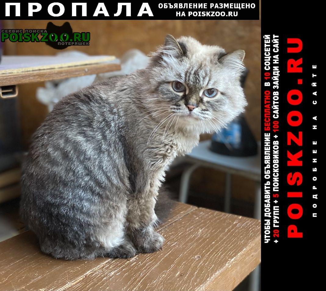 Новосибирск Пропала кошка.