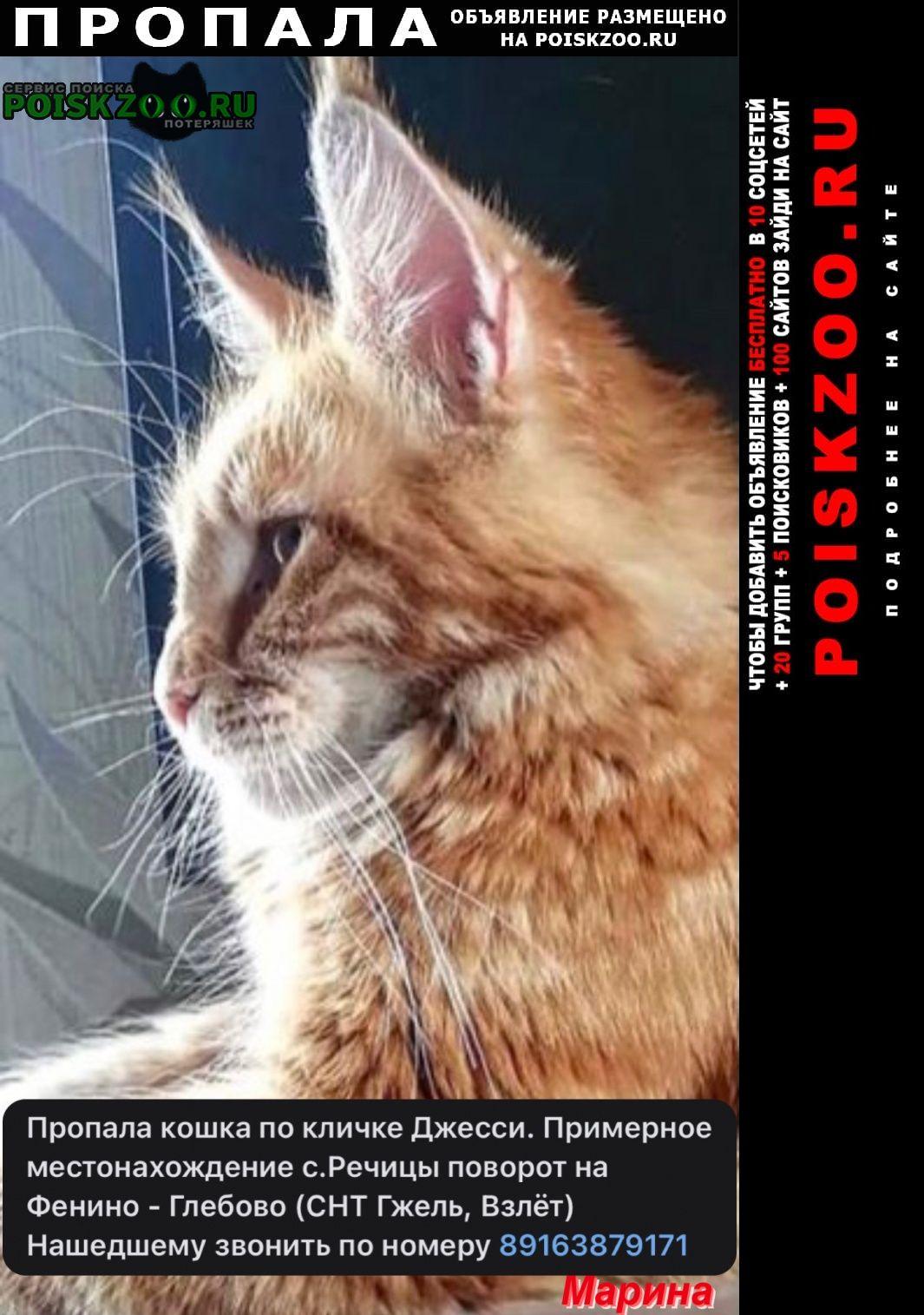 Пропала кошка по кличке джесси Раменское