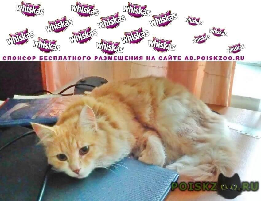 Пропал кот пушистый рыже-белый, янтарные глаза г.Жуковский