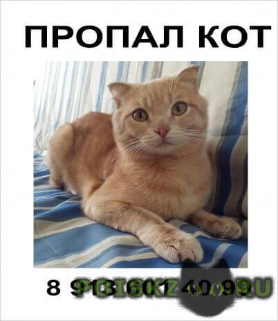 Пропал кот любимец семьи г.Омск