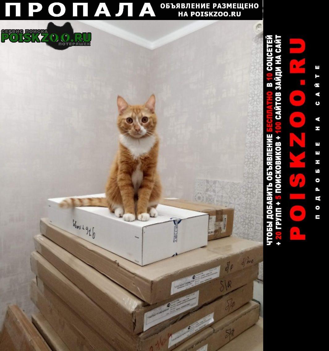 Пропал кот помогите найти Электрогорск