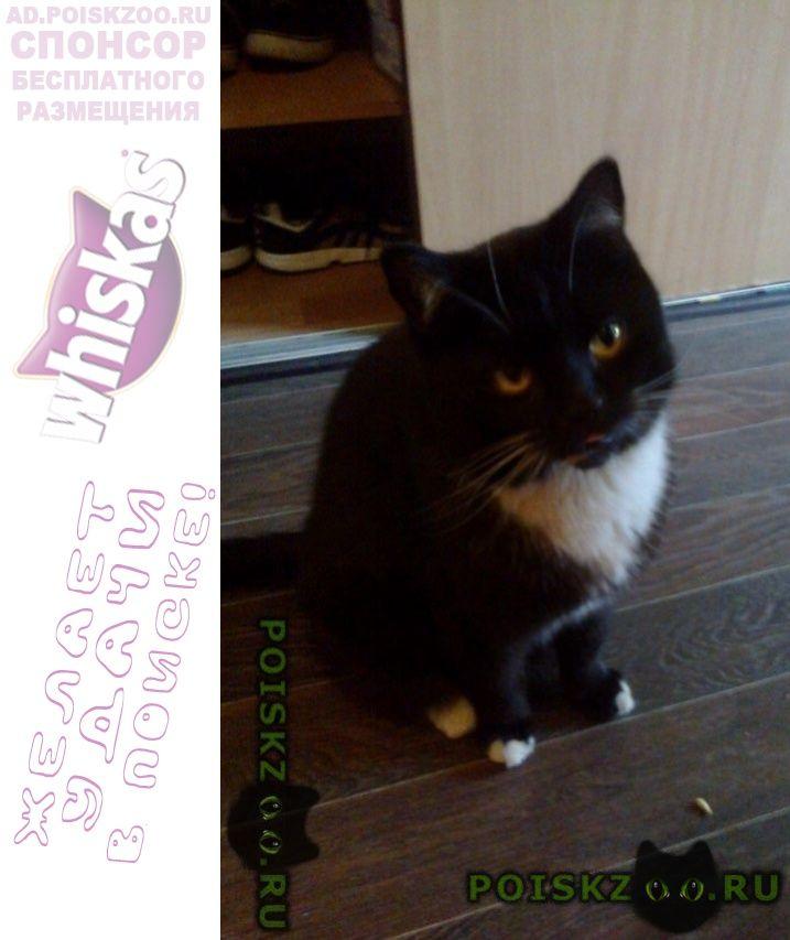 Пропал кот очень прошу помочь в поисках вшего г.Калуга