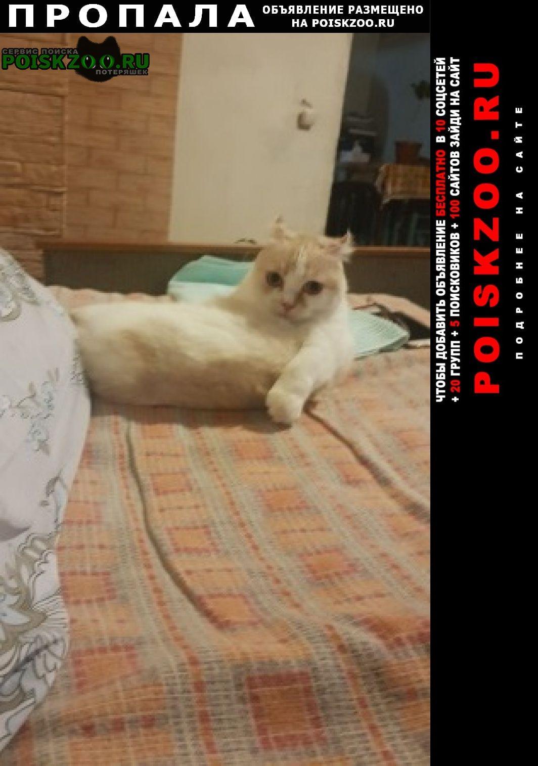 Пропала кошка Владивосток