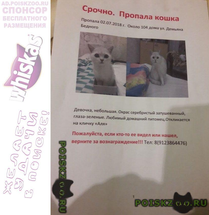 Пропала кошка г.Тюмень