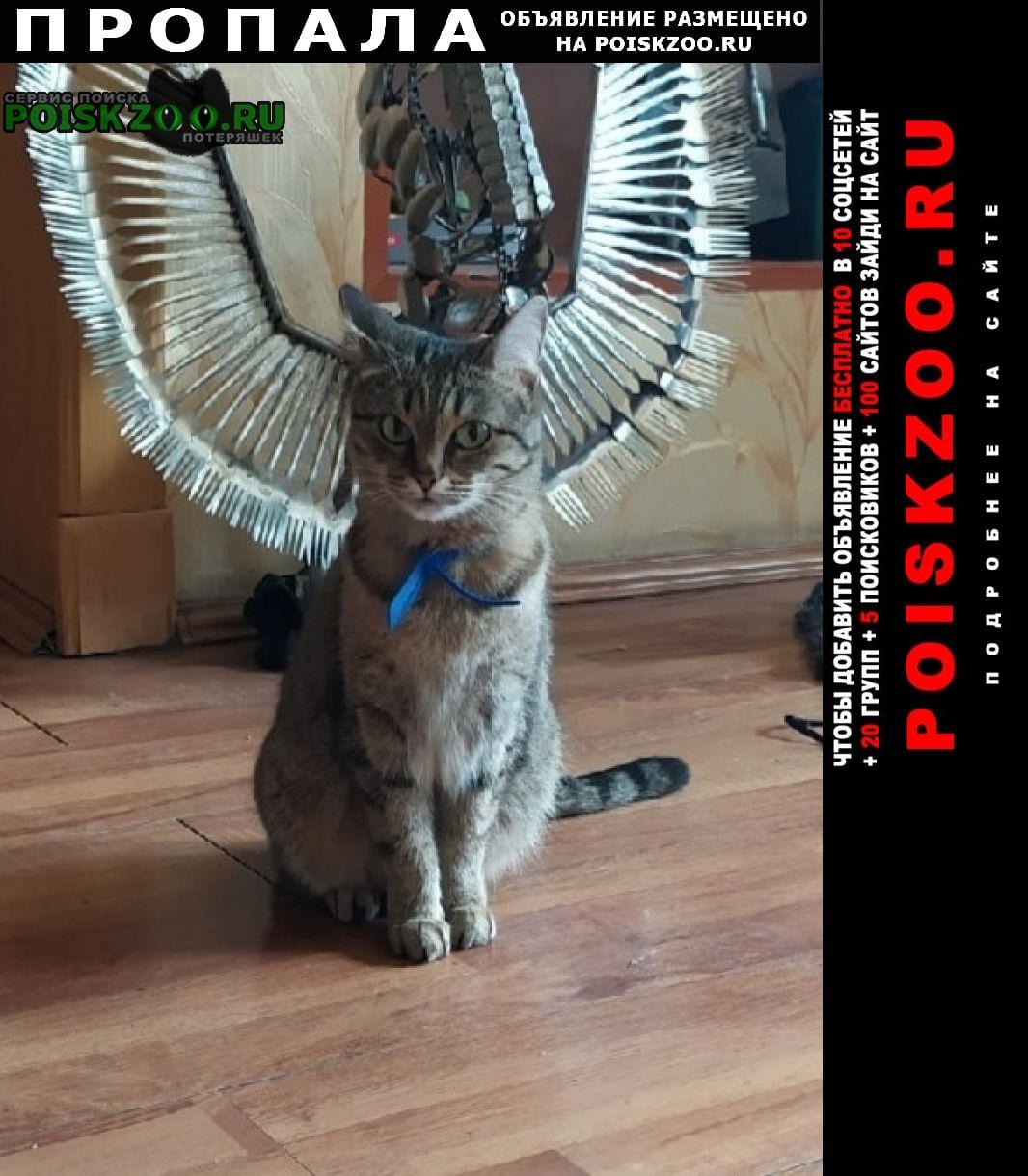 Пропала кошка камышового окраса Екатеринбург