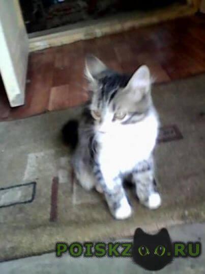 Пропала кошка г.Тамбов