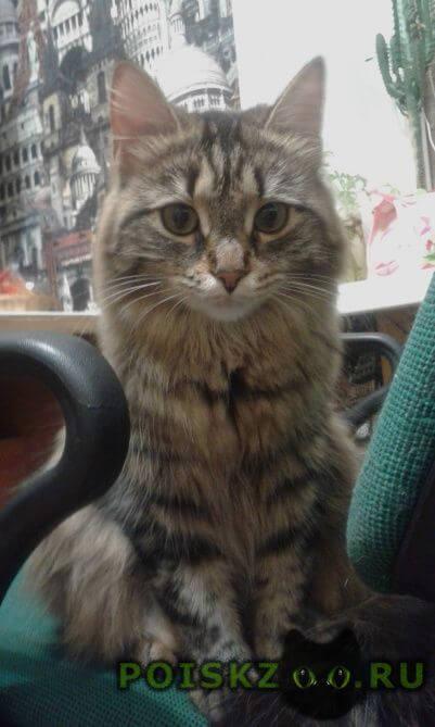 Пропала кошка в районе теплотеха г.Челябинск
