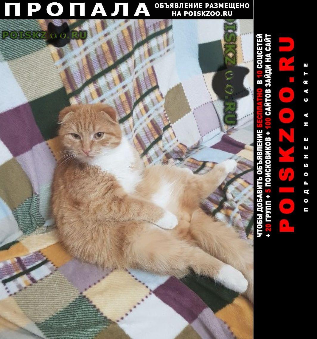 Пропал кот рыжий вислоухий . г.Шахты