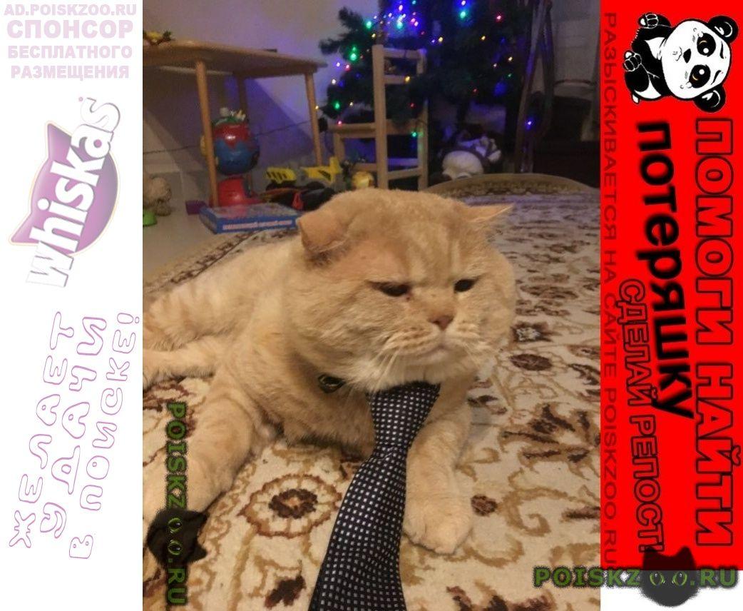 Пропал кот г.Всеволожск
