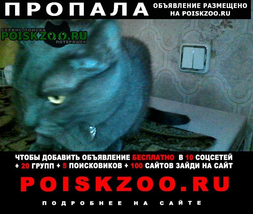 Пропала кошка русская голубая Москва