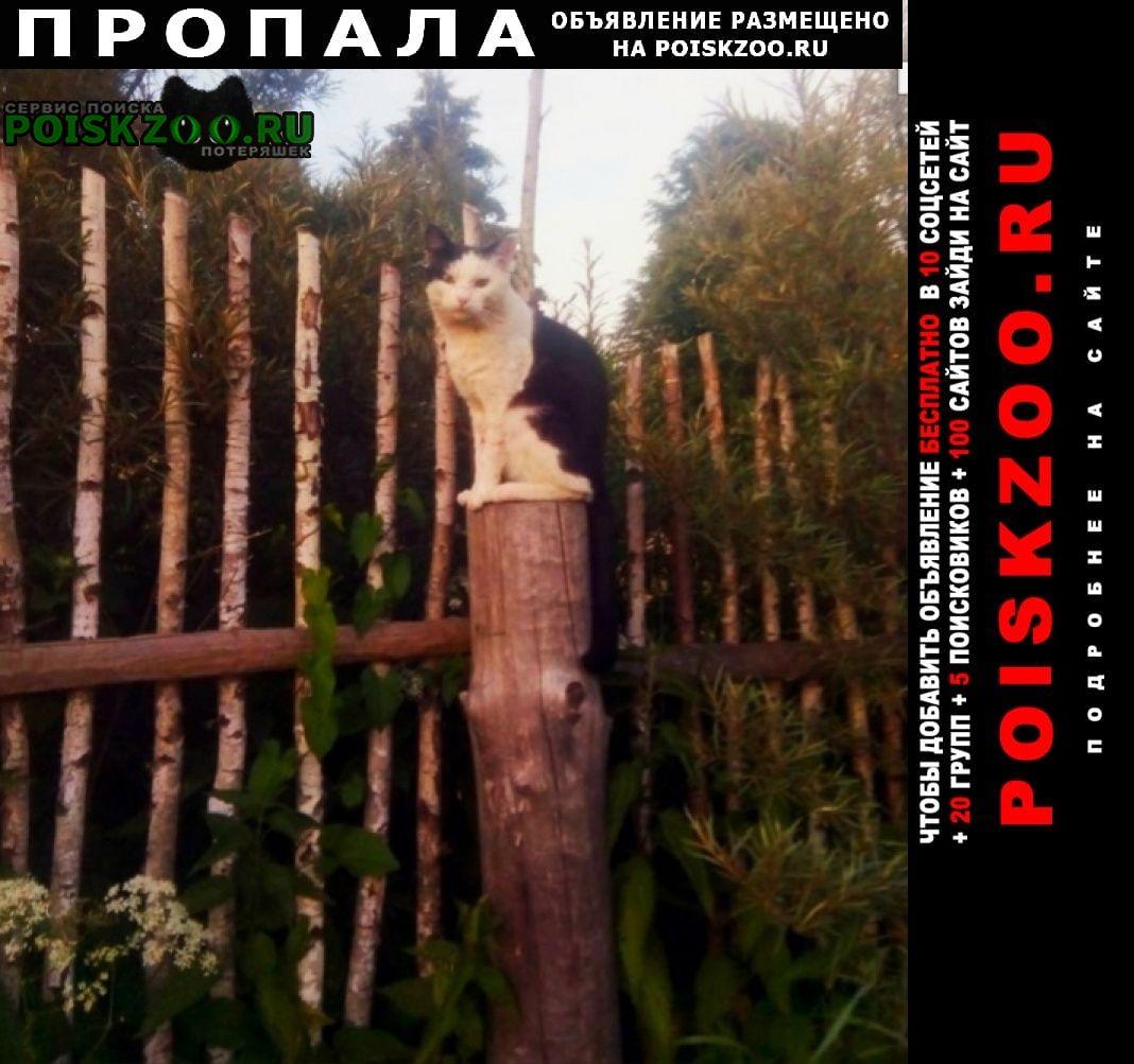 Пропал кот рядом снт истоки Волоколамск