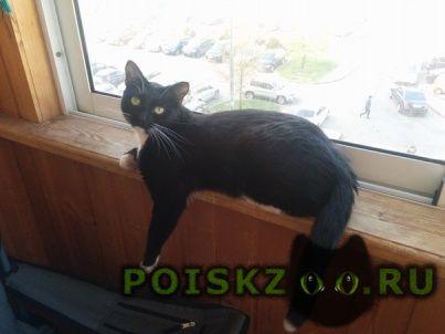 Пропала кошка черная с белыми лапками, зеленогра г.Зеленоград