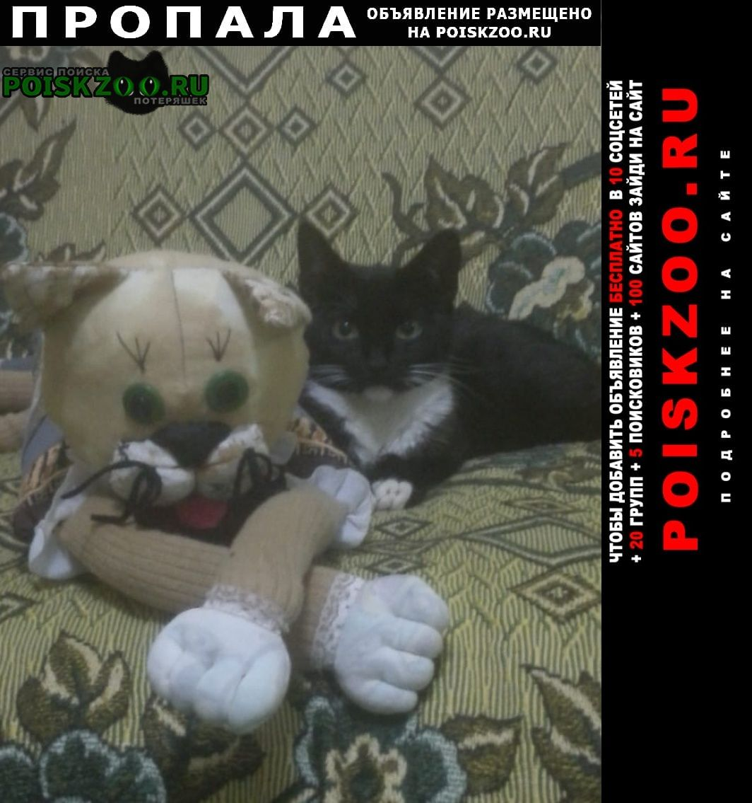 Пропала кошка котик марсик. Рыбинск
