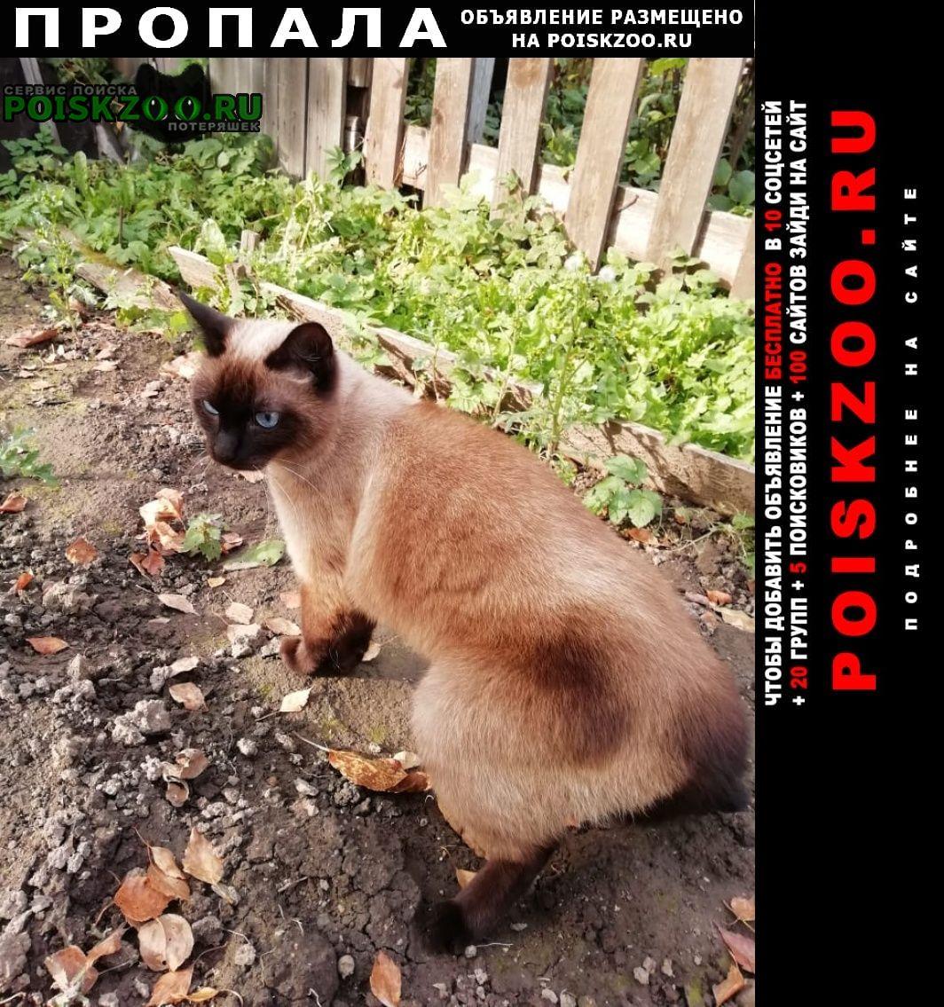 Пропала кошка сиамкой породы Долгопрудный