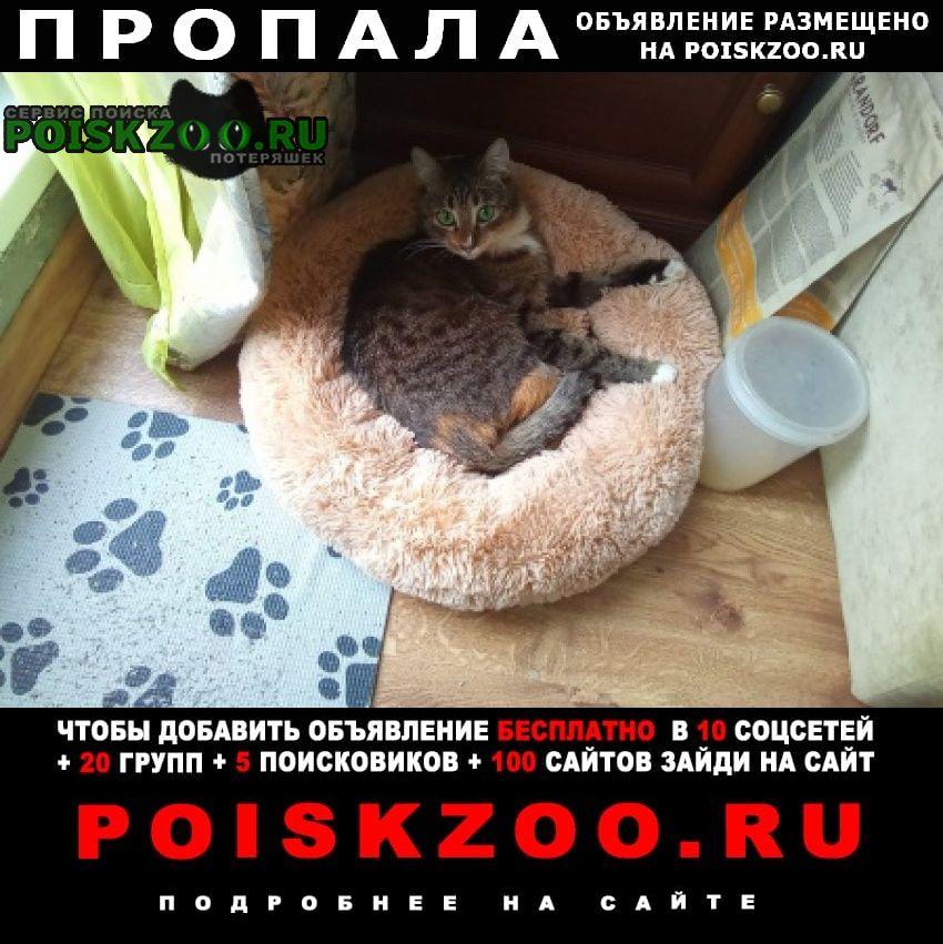 Пропала кошка 3 мая Санкт-Петербург