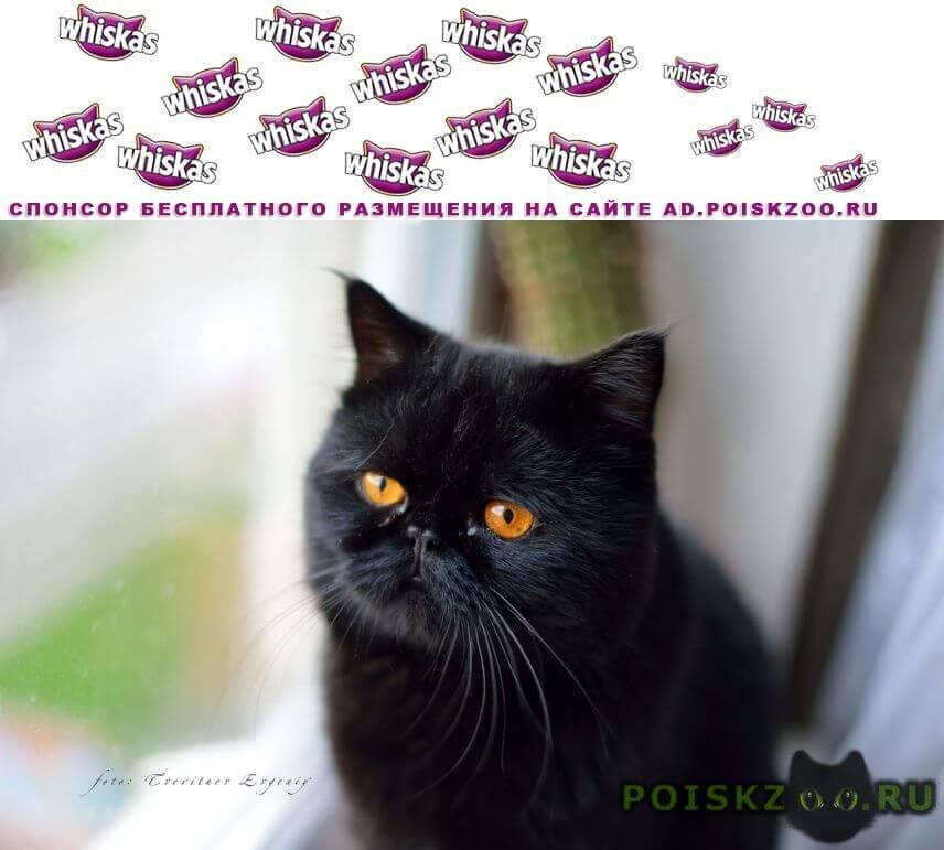 Пропал кот черный г.Гаврилов Посад