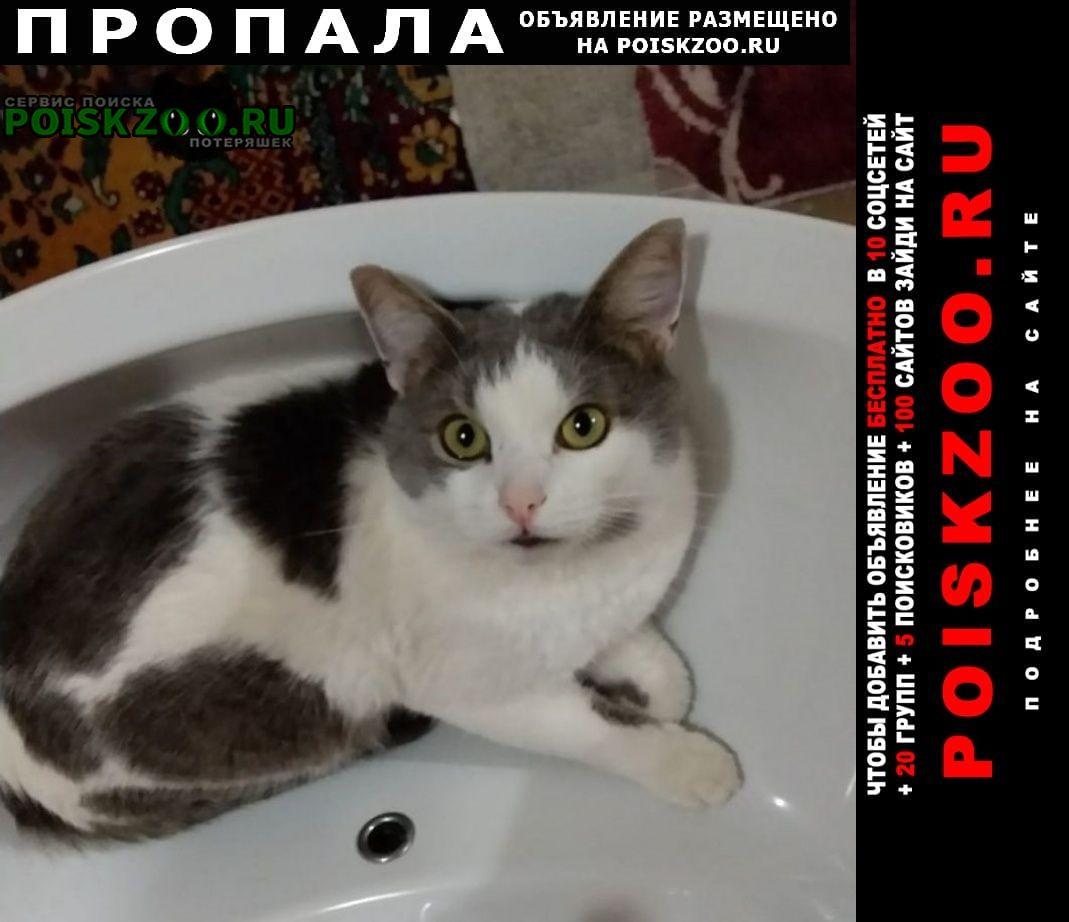 Пропал кот самец Дорохово