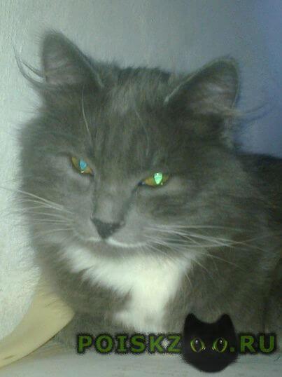 Пропала кошка кот 1.7 лет г.Новочеркасск