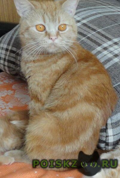 Пропала кошка цвет рыжий с разводами.дзержинский район г.Новосибирск