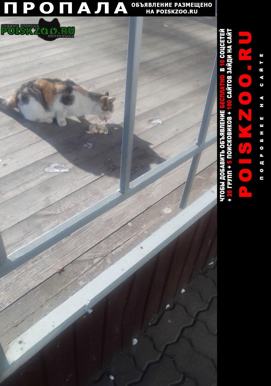 Пропала кошка муся трехцветная Белгород