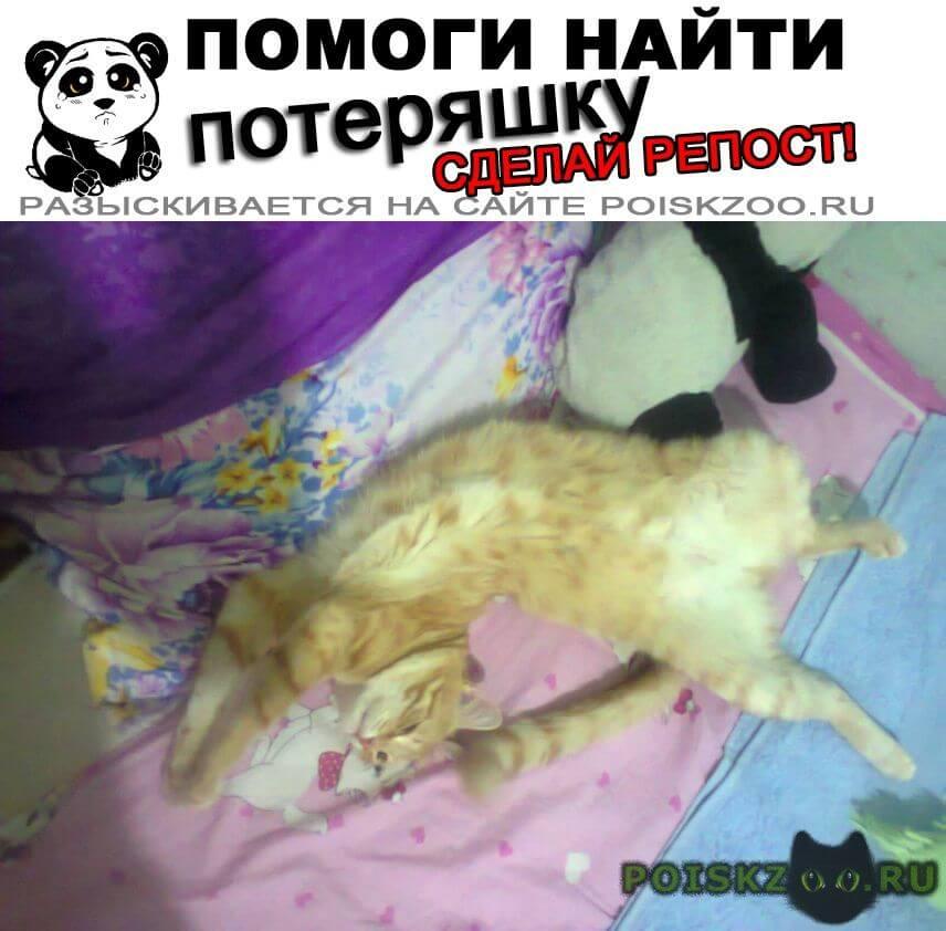 Пропал кот рыжий г.Омск