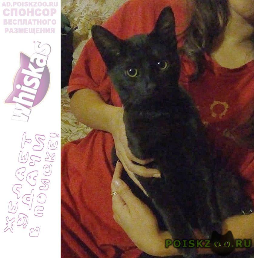 Пропал кот черный г.Фирсановка