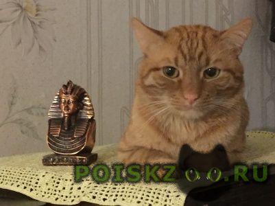 Пропал кот рыжий г.Владимир