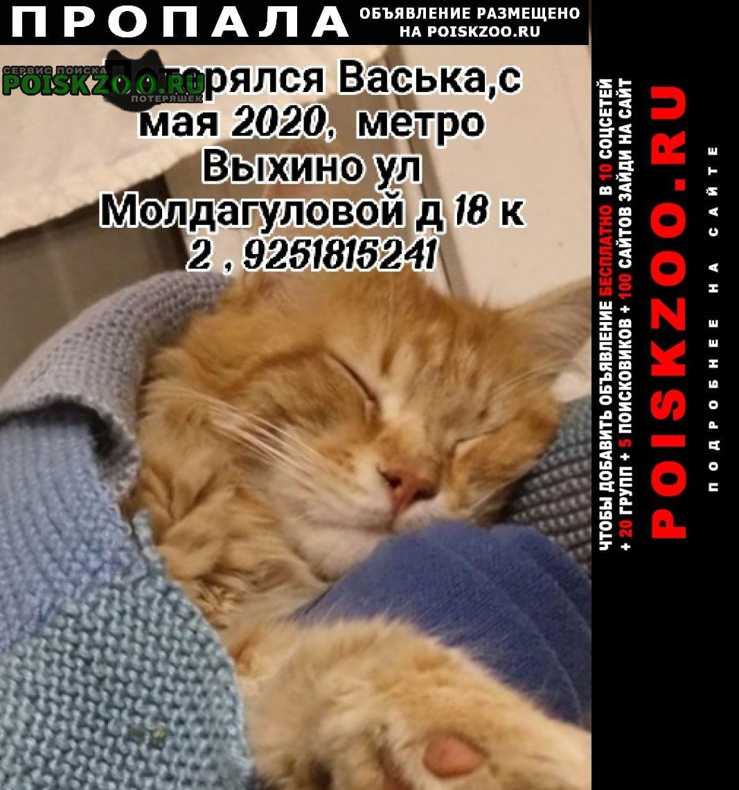 Пропала кошка кот помесь мейкуна Москва