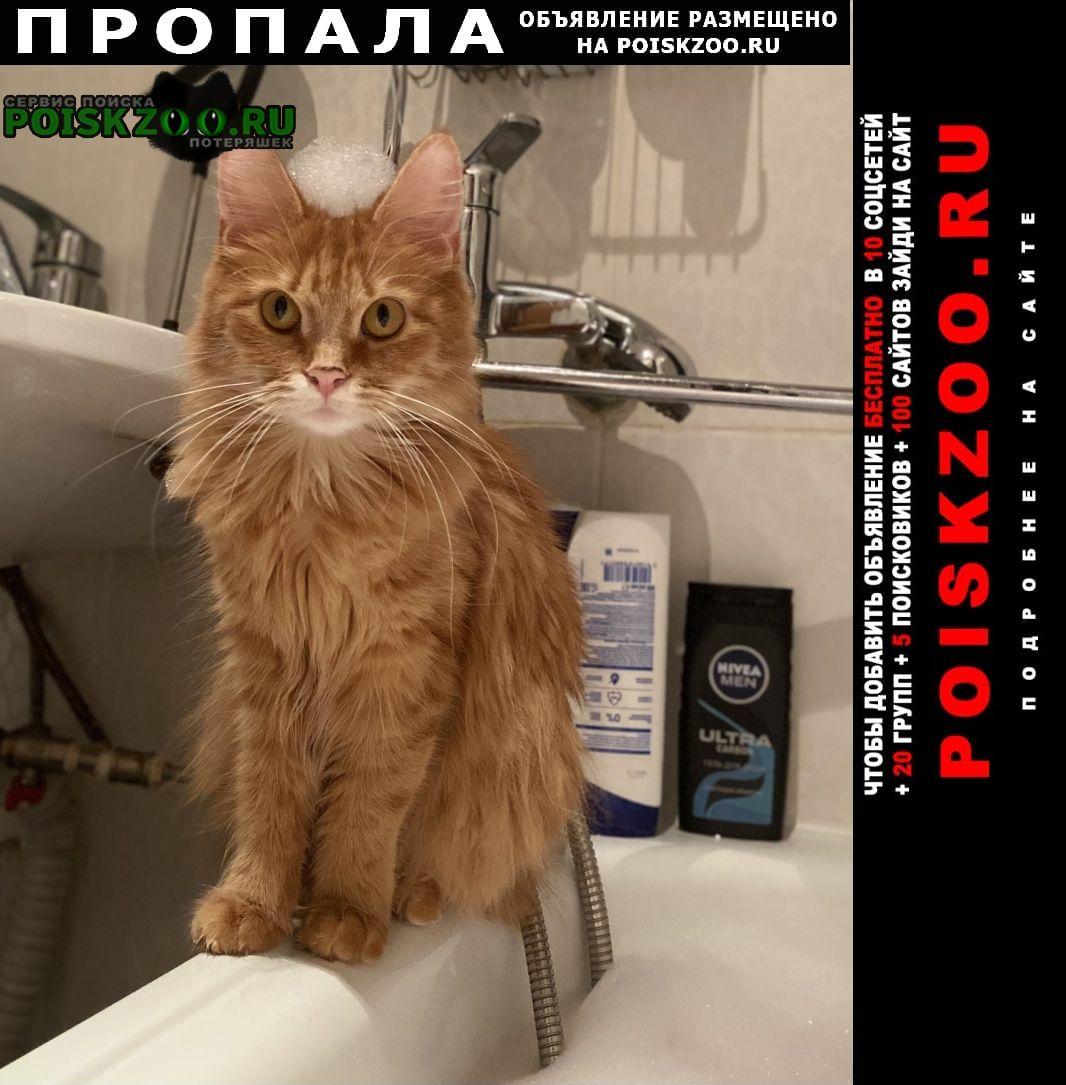 Пропала кошка рыженькая кошечка Энгельс