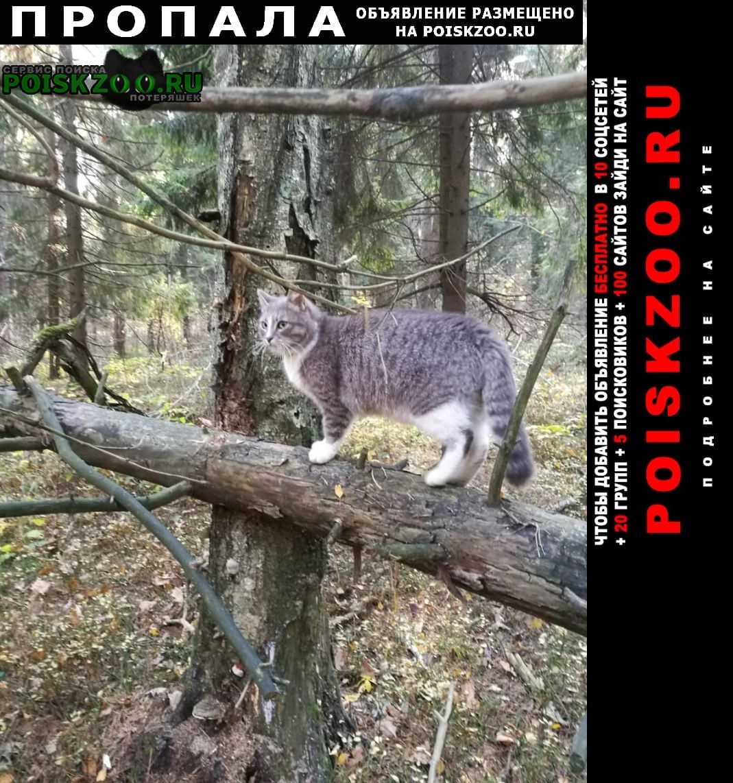 Пропал котик феликс. помогите найти Полушкино