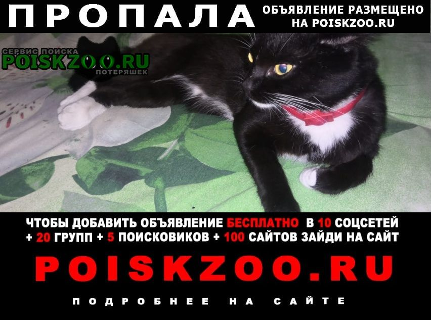 Пропала кошка м.гагаринская Новосибирск