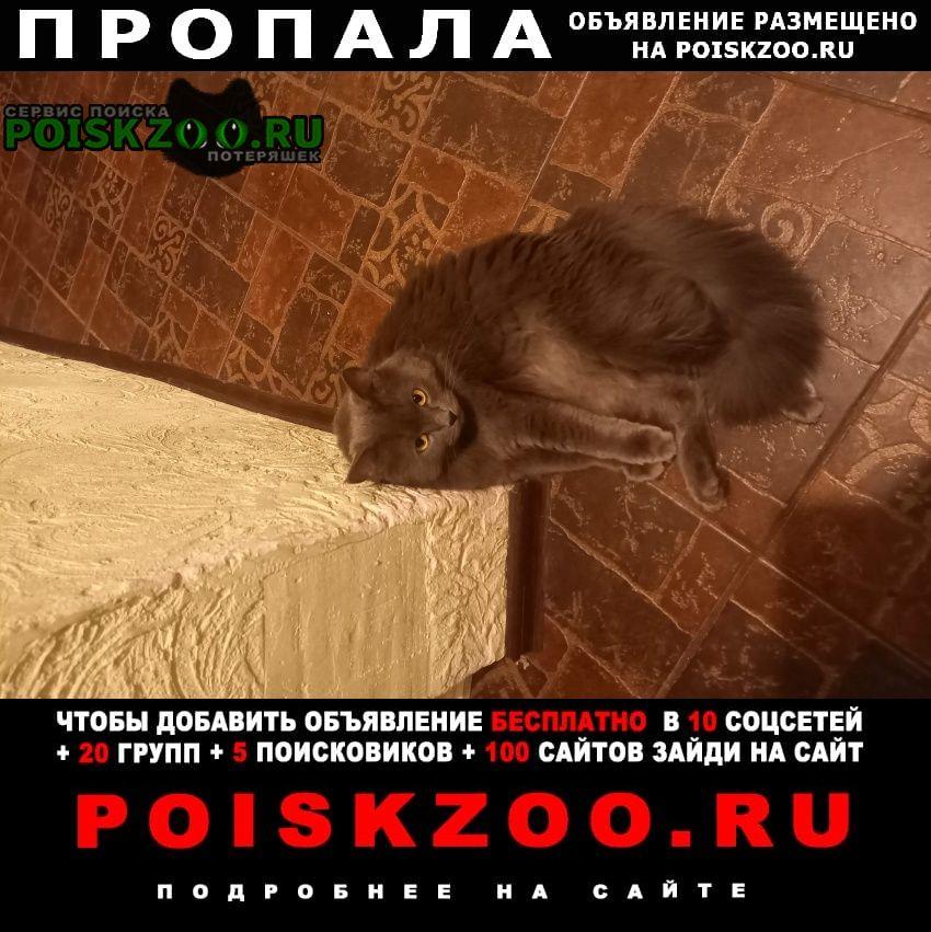 Пропала кошка Домодедово